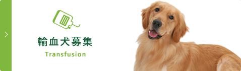 輸血犬募集